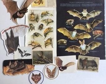 Bat Pack, BatPaper, Unique paper pack, Scrapbook supply, Junk journal bat pack