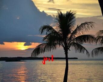 Florida Keys Palm Tree (JMT10)