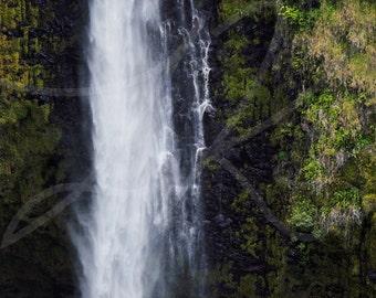 Akaka Falls II - fine art photograph