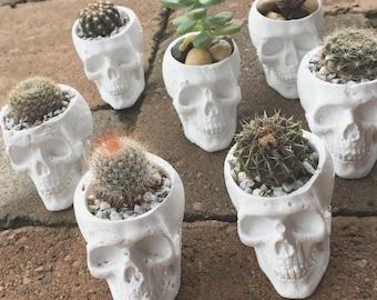 Plaster Skull Planter - Small