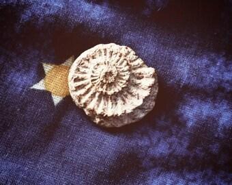 Small Ammonite fossil