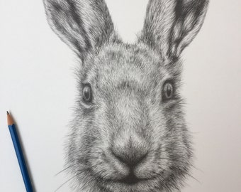 A3 Hare pencil drawing fine art print