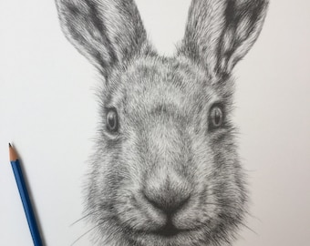 A3 Hare pencil drawing print