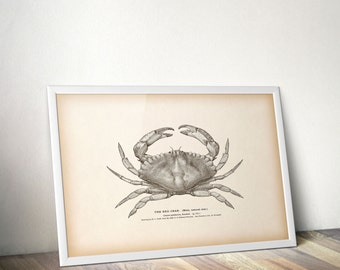 Nautical art print, Crab print vintage, Printable digital, Home wall decor, Digital art print, Instant print, Antique illustration, Download