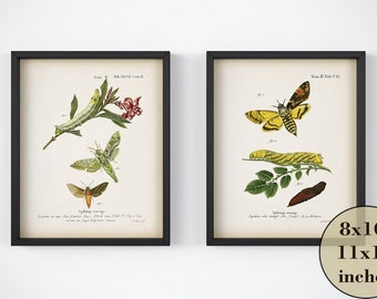 Insect print set, Set of antique prints instant download, Moth print set, Insect art vintage, Wall art set, Printable 8x10 art, 11x14 art