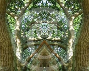 forest secret 2, poster and fine art print 30 x 30 cm 30 x 30 cm, fine art print 40 x 40 cm