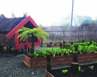 Vegetable Garden Print