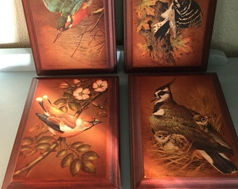 Bird prints, on wood woodpecker, hawfinch, lapwing, kingfisher signed Basil Ede