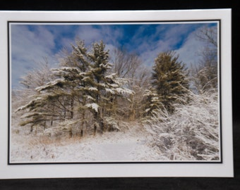 Pine Trees & New Fallen Snow 5x7 Blank Card By ThomasMinutoloPhotos