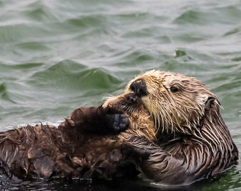Mom and baby seaotter