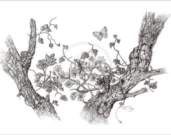 Mayflowers, Giclee Fine Art Print, Black and White, Fine Line, Pen & Ink Drawing of British Wildlife