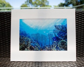 "Underwater Photography, 16x20"" matted print, wall art, matted photo, 11x14 print"