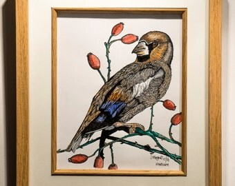 Hawfinch Original Framed Drawing - Ink And Watercolour