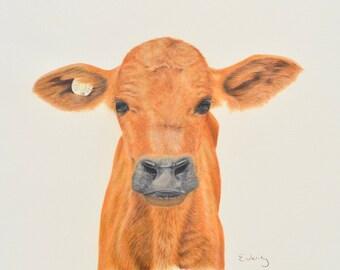 Original portrait drawing of calf in coloured pencil art - 'Jasmine' (framed)