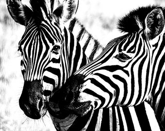 Zebra. African Wild Life. Black and White Photographic Print. Black and White Art. Wall Art. Interior Decoration. Wil04