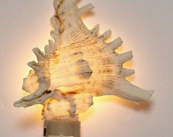 Rams Murex Natural Seashell Night Light (gift boxed) Shell Nightlight