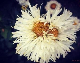 Little Flower Falling In Love