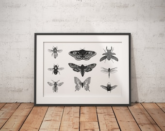 Multi Insect Print