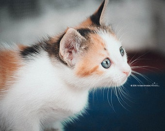 Kitten picture Cute cat photo Cat photography Cat photo download Kitty photo Red White cat Animal photo digital Cat picture Tricolor kitten
