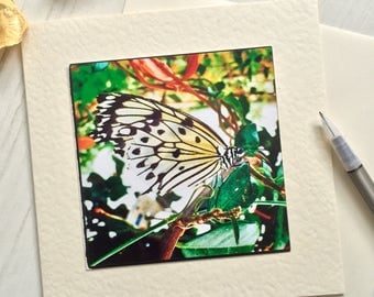 White butterfly card, any occasion, greetings card, all occasion, wildlife card, nature card, photo card, quirky card, for gardeners (AO9)