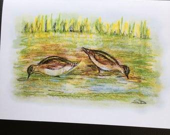 Bird art greetings card from an original drawing of snipe feeding.