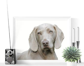 Dog Printables | Weimaraner Dog Photograph Printable | Pet Prints | Dog Prints | Dog Art | Weimaraners Prints | Home Decor