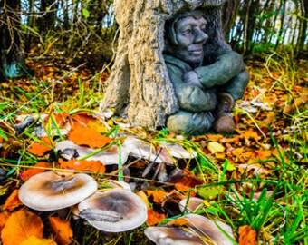 EXCLUSIVE Pixie Goblin Bird Bath set in Tree Trunk Hand Made in UK