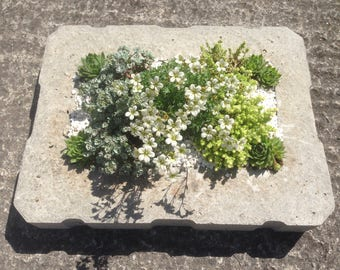 Handmade stone hypertufa planter with alpine plants as shown