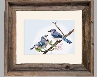 Blue Jay - Framed- Barnwood