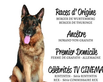 HISTORY of the German Shepherd - Breed - poster - decoration - gift - dog - customizable