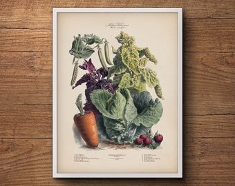 Vegetable print, French vegetables poster, Botanical print, Kitchen wall art, Kitchen decor, Botanical art, Large botanical poster