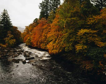 Trees At The Falls Of Dochart, Scotland