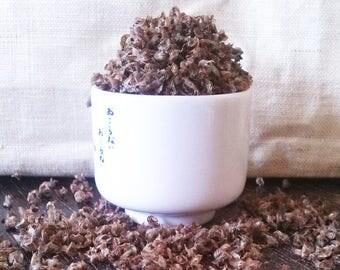 KAPOOR TULSI (30 seeds) Holy Basil- Ocimum sanctum -Sacred Hindu Plant, Adaptogen, Antiseptic, Antibacterial -