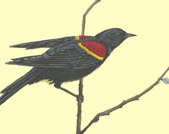 Red-Winged Blackbird Male- SomervilleArt - Watercolour Print - Mother's Day Gift
