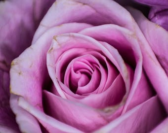 Flower Print, Macro Photography, Rose Print, Nature Photography, Rose Art, Wall Art, Home Decor, Poster, Prints