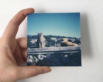 """MallorCATS no03 """"Little interest"""" - Polaroid print aluminium 9 × 9, matt"""