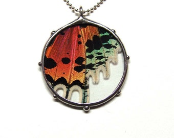 Unique Gift - Real Sunset Moth Circle Necklace - Real Wing in Glass
