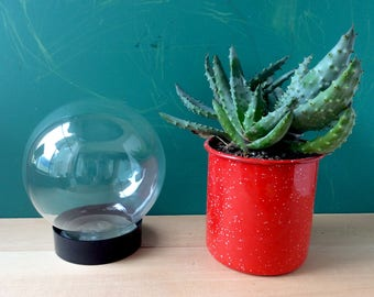 Glass Orb Terrarium, Water Plants. Glass Ball. Glass Sphere. Glass Globe. Vintage Display Case.