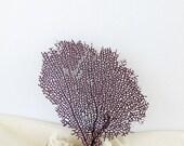 Sea Fan Purple Violet Grape Color, Natural Bahama Seafan Coral,  Sea Fan Coastal Beach Decor for Framing, Seafan to Frame