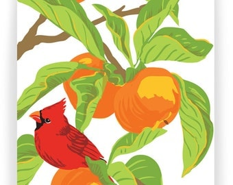 Cardinal in Persimmon Tree : Box of 8 A2 folding blank cards