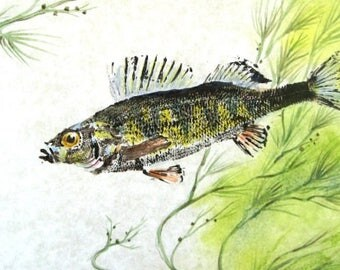 ORIGINAL Color Perch real GYOTAKU ( Fish Rubbing ) on Rice Paper Lake Art Decor by Barry Singer