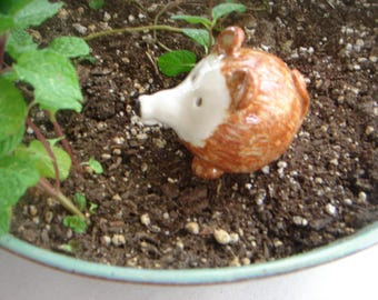 Miniature Hedgehog, Terrarium Animal, Fairy Garden