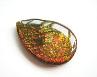Big Ammolite Focal Drop - 22x32mm