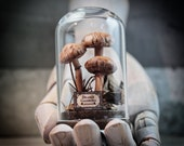 Sculpture in a Bell Jar, Mushrooms, Deadly Galerina, Natural History Gifts