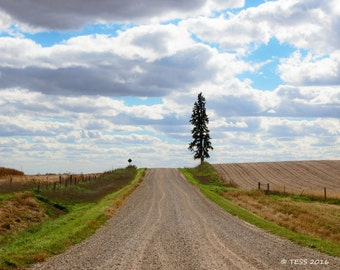 Country Road Photo - Backroads Photographic Print  -  Landscape Photography - Nature - Gravel Art