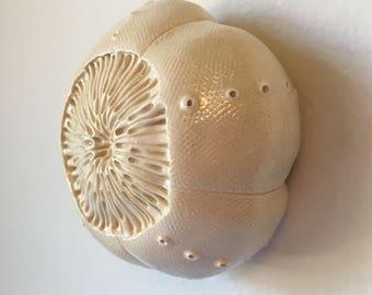 One Ceramic Sea Urchin Pod Wall  Art 2