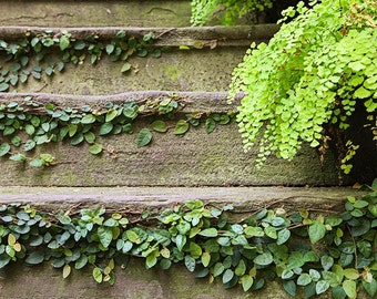 Fine Art Photograph, Savannah Georgia Art, Photography Print, Affordable Home Decor, Stairs Covered in Ivy, Architecture Print, Gift for Her