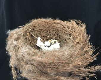 Birds NEST w broken Bird SHELL