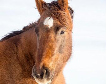 Chestnut Horse Portrait | Horse Home Decor | Large Horse Print
