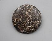 Round shaped Turitella  Cabochon